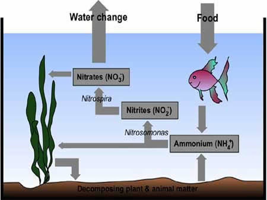 The Nitrogen Cycle:
