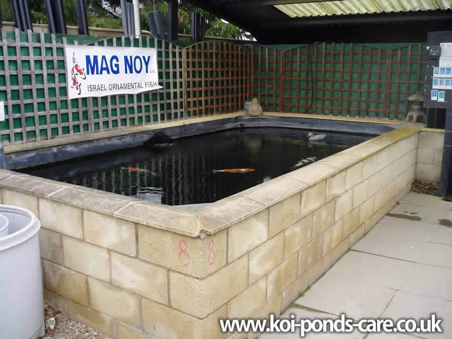 Koi pond pump selection for Concrete fish pond construction and design